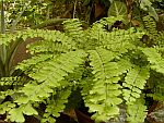 Photo of Ferns